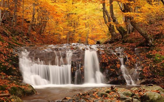 Fondos de pantalla Cascada, bosque, árboles, rocas, otoño.