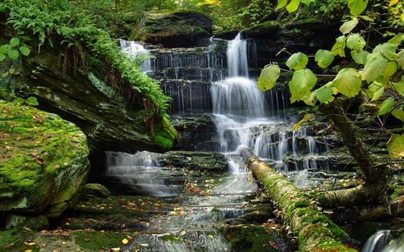 Wallpaper Waterfall, rocks, moss, green leaves
