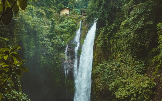 Papéis de Parede Cachoeira, árvores, verde