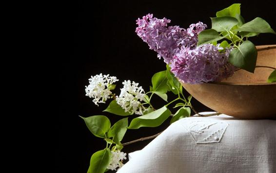 배경 화면 흰색과 분홍색 라일락 꽃, 검은 배경