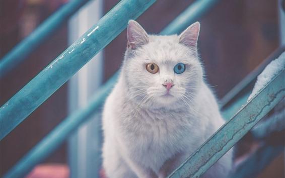 Fondos de pantalla Gato blanco, ojos azules y amarillos, escaleras.