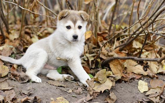 Fondos de pantalla Cachorro blanco, hojas, ramitas, otoño