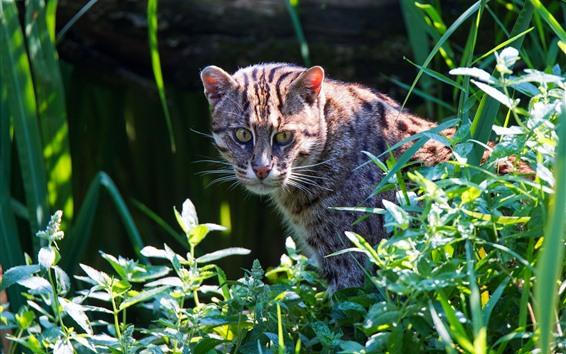 Fondos de pantalla Gato salvaje mirar hacia atrás, plantas, verde