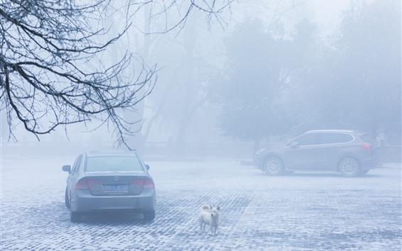 Fondos de pantalla Invierno, mañana, nieve, árboles, coches, perro, niebla