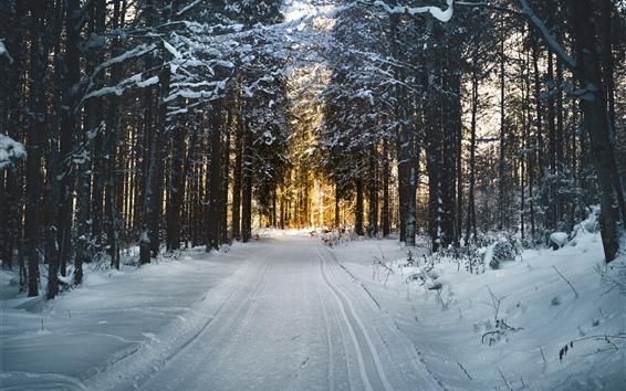 Fondos de pantalla Invierno, árboles, sendero, nieve, sol