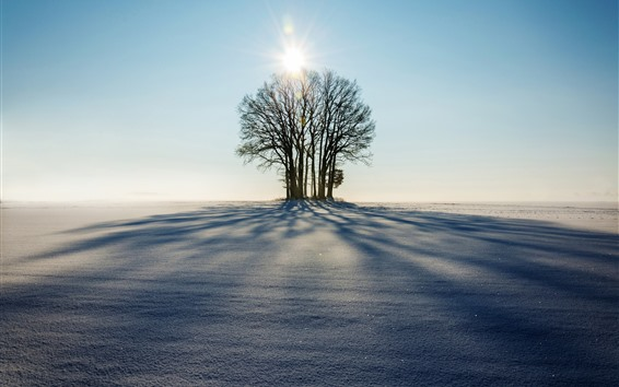 Wallpaper Winter, trees, sunshine, shadow, snow