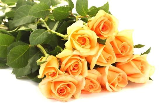 Fondos de pantalla Rosas amarillas, fondo blanco