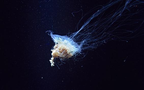 Wallpaper Beautiful jellyfish, sea animal, underwater