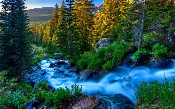 Fondos de pantalla Naturaleza hermosa, arroyo, árboles