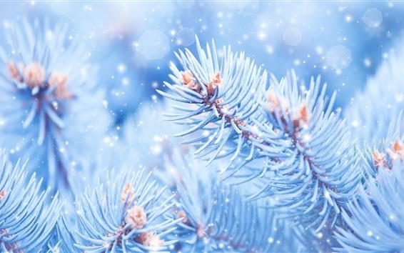 Papéis de Parede Galhos Spruce bonitos, neve, geada