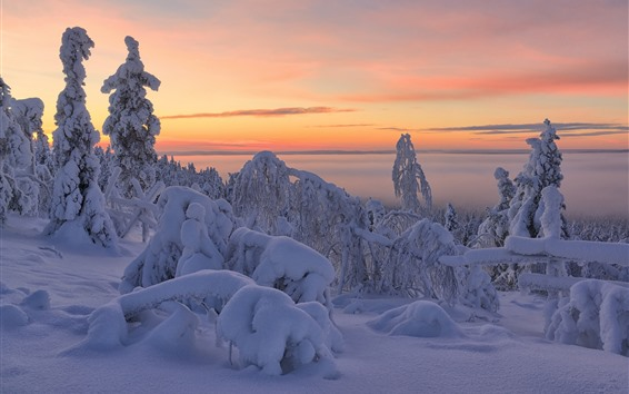 Обои Красивая зима, густой снег, деревья, сумерки