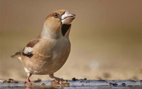 Fondos de pantalla Pájaro, pico, mirar hacia arriba.