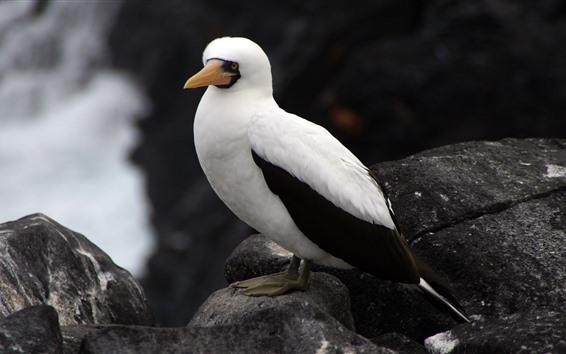 Fondos de pantalla Pájaro, pico, plumas blancas y negras.