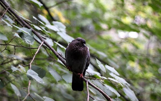 Fondos de pantalla Pájaro negro, ramitas, fondo brumoso.