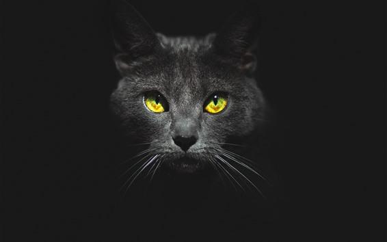 Fondos de pantalla Gato negro, cara, ojos amarillos, oscuridad.