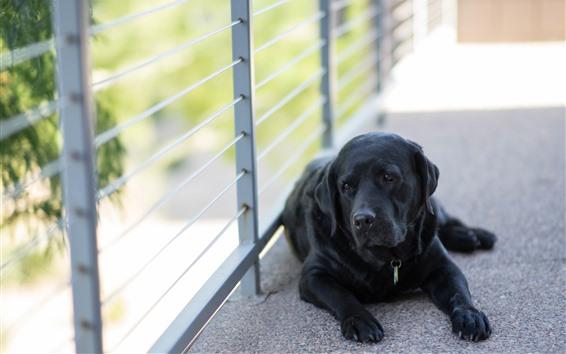 Wallpaper Black dog, rest, fence