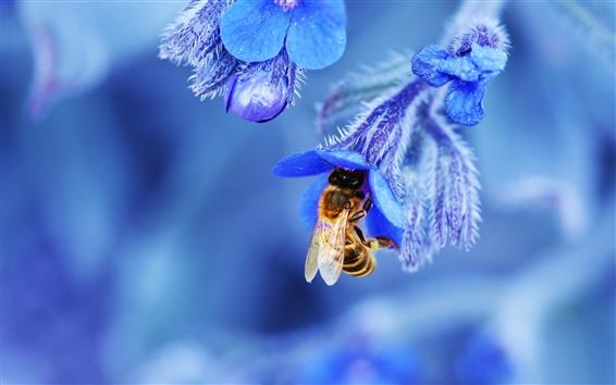 Fondos de pantalla Flores azules, abeja, fotografía macro.