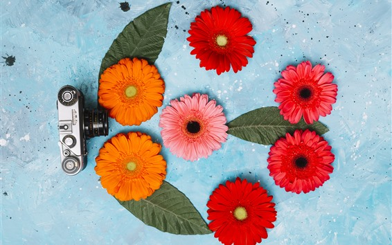 배경 화면 카메라와 gerbera 꽃