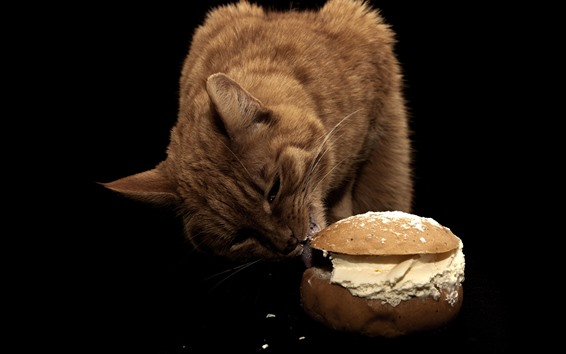 Wallpaper Cat eat sandwich, black background