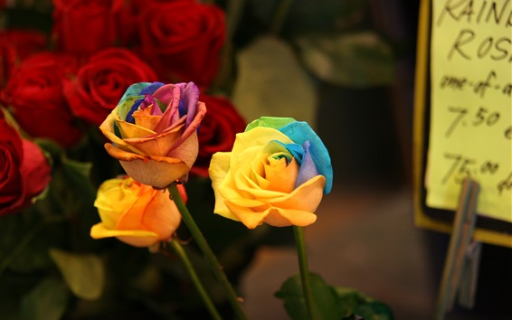 Fondos de pantalla Rosas coloridas, pétalos del arco iris