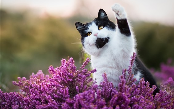 Fondos de pantalla Lindo gato, flores rosadas, hola, animal gracioso.