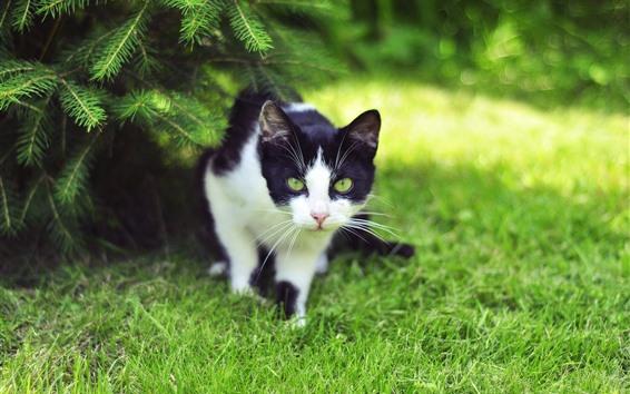 Fondos de pantalla Lindo gatito caminando, hierba, verde