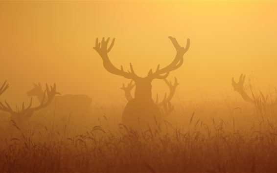 Fondos de pantalla Deers, niebla, mañana
