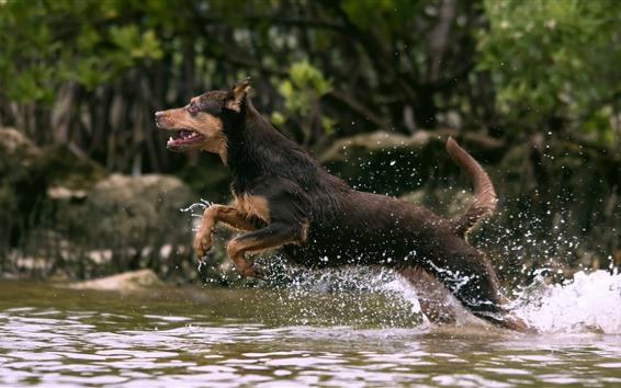 Fondos de pantalla Perro corriendo en el agua del arroyo