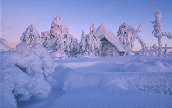 Papéis de Parede Finlândia, lapónia, inverno, grossas, neve, árvores, casa