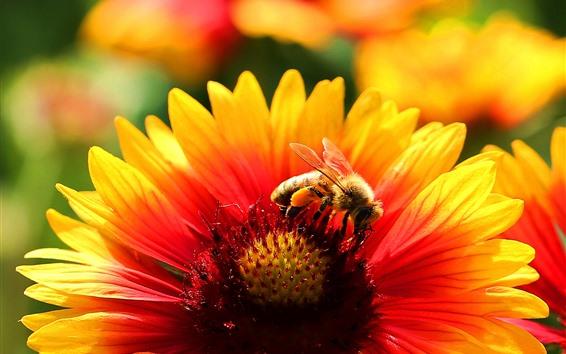 배경 화면 꽃, 꽃잎, 벌