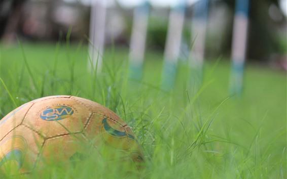 Fondos de pantalla Fútbol, hierba verde