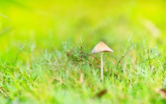 Обои Свежая природа, трава, грибы, роса