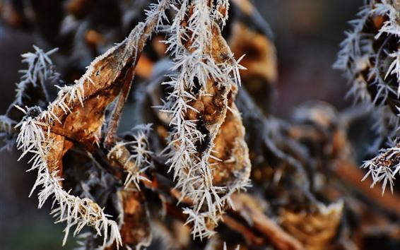 Fondos de pantalla Frost hojas amarillas, otoño