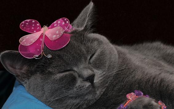 Fondos de pantalla Gracioso gato gris, decoracion mariposa