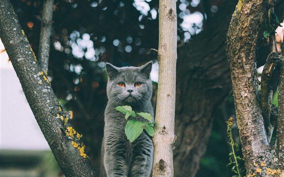 Обои Серый котенок, деревья