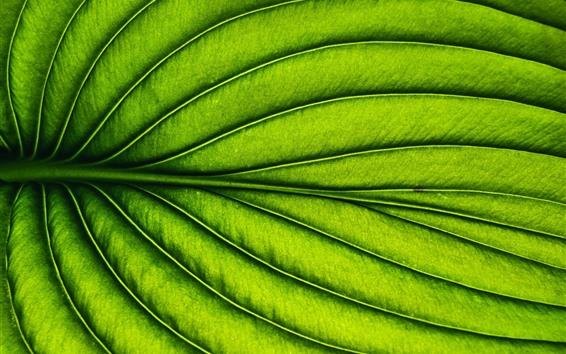 Papéis de Parede Folha verde, listras