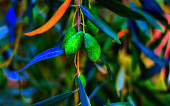 Fondos de pantalla Aceitunas verdes, hojas