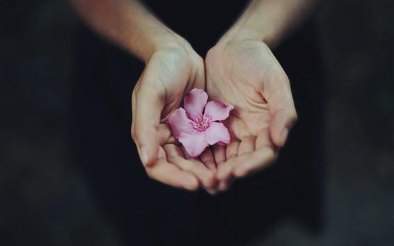 壁纸 手,粉红色的花