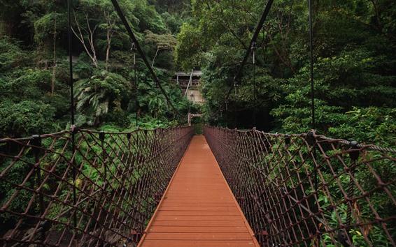 Fondos de pantalla Puente colgante, arboles verdes, tejido.
