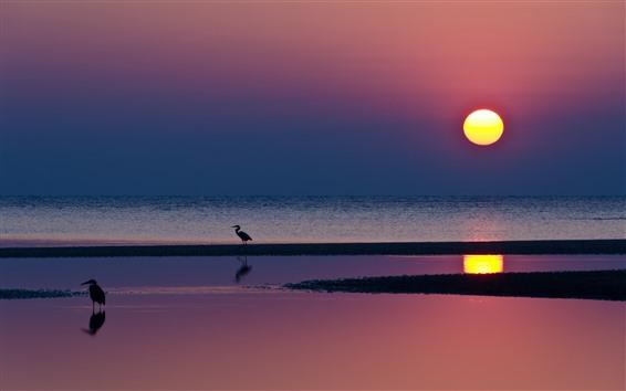 Wallpaper Heron, birds, sea, sunset, beautiful scenery