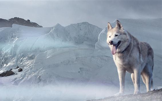 Papéis de Parede Cão Husky, geleira