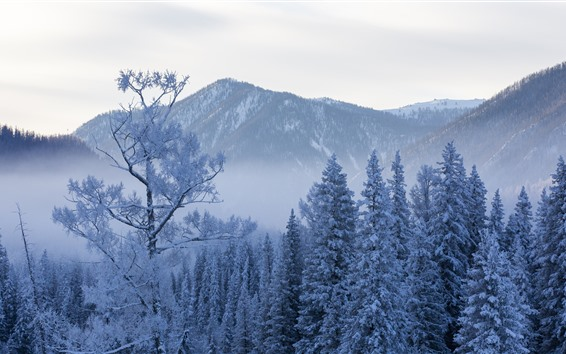 Wallpaper Kanas in the winter, trees, snow, beautiful nature landscape, China