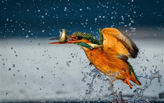 Papéis de Parede Martim-pescador pegar um peixe, respingos de água