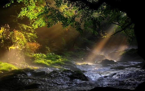Fondos de pantalla Naturaleza, árboles, arroyo, rayos solares