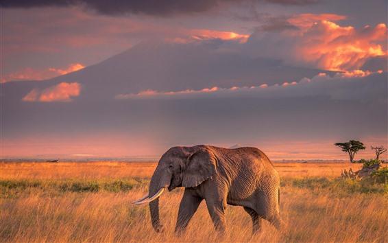 Papéis de Parede Um elefante, grama, nuvens