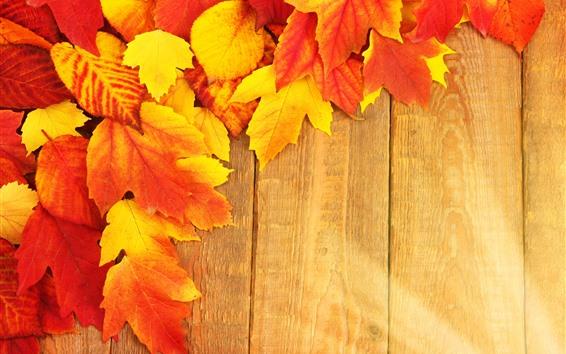 Fondos de pantalla Hojas de arce anaranjado y amarillo, tablero de madera