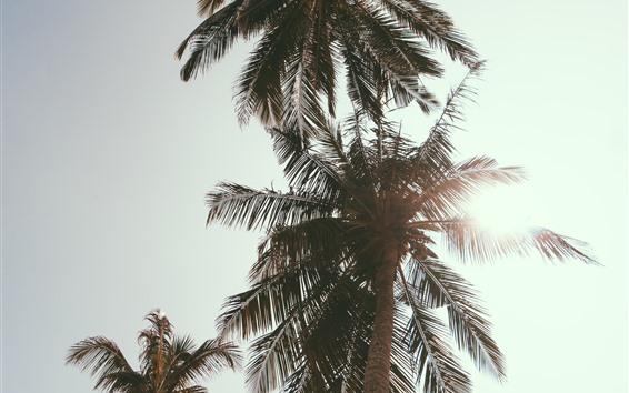 Fondos de pantalla Palmeras, cielo, sol