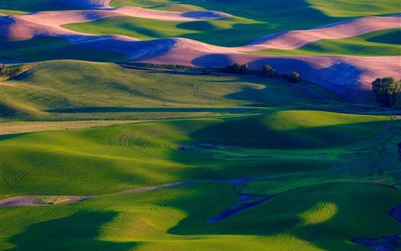 Fondos de pantalla Palouse, campos verdes del trigo, árboles, los E.E.U.U.