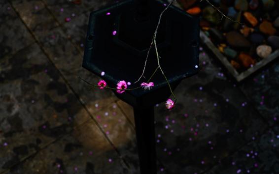Обои Розовые сливовые цветы, веточки, весна