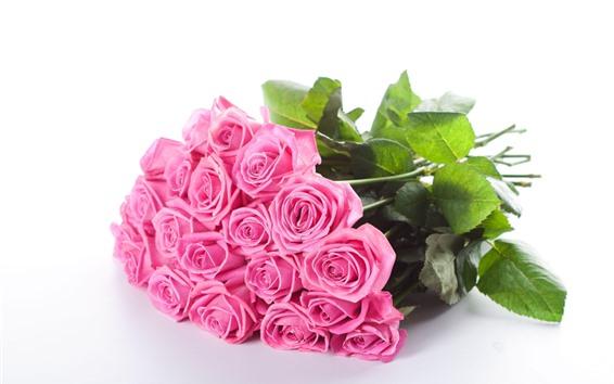 Fondos de pantalla Rosas rosas, flores, fondo blanco.